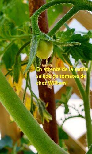 copie-0_william-tomates