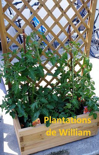 copie-0_william-plantations