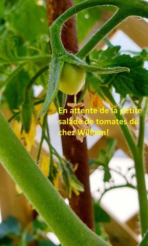 copie-0_william-tomates